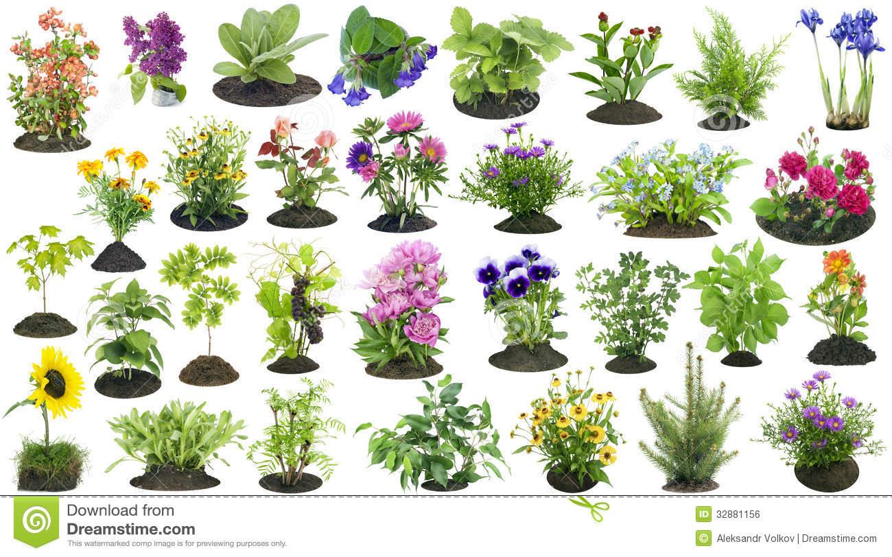 Ecosur realizar taller de ciencias de plantas para - Plantas de interior pequenas ...