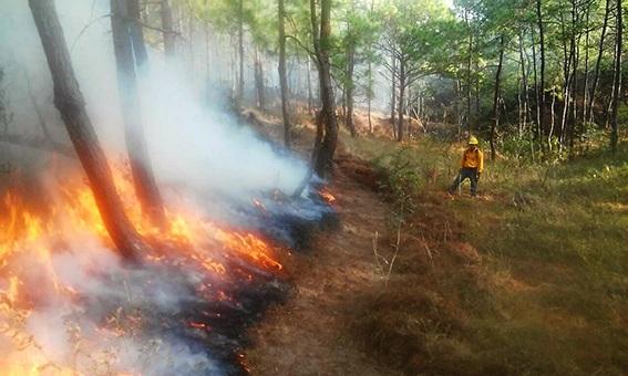 En riesgo programa contra incendios Noticias mas recientes del medio del espectaculo